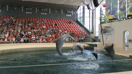 yunus : VARNA, BULGARIA - JULY, 2018: Dolphin show in dolphinarium Stok Video