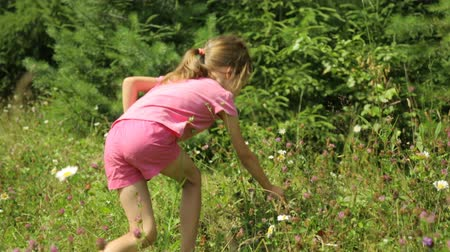 rumianek : Little girl is picking and eating wild strawberries Wideo