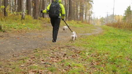stroll : Woman with dogs in autumn park Stock Footage
