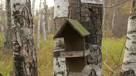 starling : Wooden bird house on birch