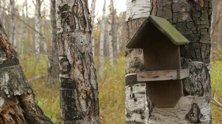 szpak : Wooden bird house on birch