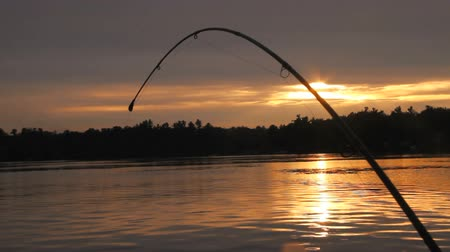 szczupak : Bent fishing rod at Sunset or Sunrise Wideo