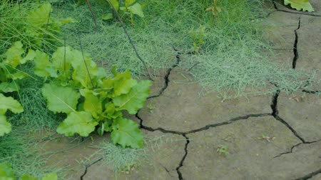 Earth is covered with cracks