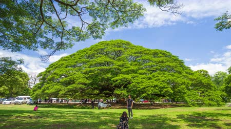 Канчанабури : KANCHANABURI, THAILAND - June 24: Time-lapse of Giant Monky Pod Tree with people visited on June 24, 2017 in Kanchanaburi, Thailand