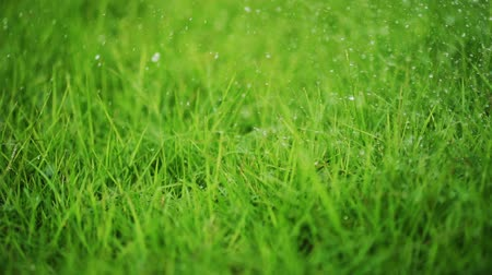 water drops spraying down on grass Wideo