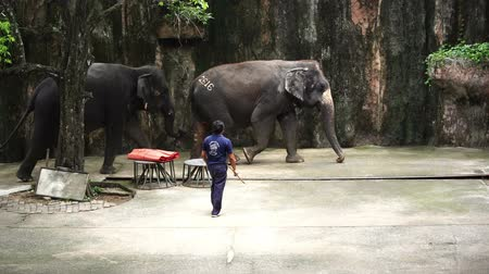 SRIRACHA, THAILAND - MARCH 1, 2018 : Daily elephant show at Sriracha Tiger Zoo, Thailand