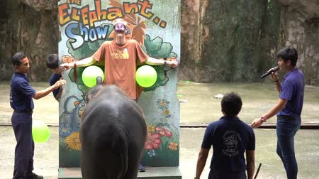 SRIRACHA, THAILAND - MARCH 1, 2018 : Daily elephant show - elephant throwing darts to target with male tourist at Sriracha Tiger Zoo, Thailand