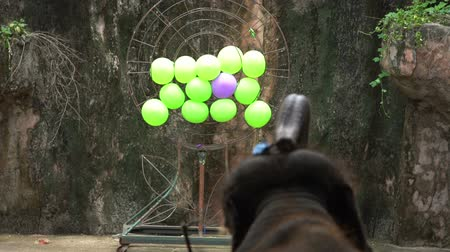 elephant with a trunk throws darts at a target with balls