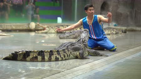 crocodilo : SRIRACHA, THAILAND - MARCH 1, 2018 : Daily crocodile show on chair at Sriracha Tiger Zoo, Thailand