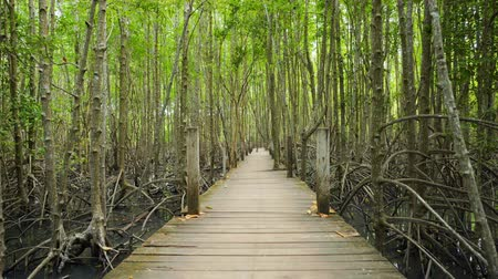 wooden bridge : panning shot of wooden bridge in a mangrove forest at Tung Prong Thong, Rayong, Thailand