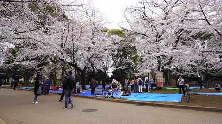 aprile : TOKYO, JAPAN - MARCH 29, 2019: Cherry blossom festival at Ueno Park. Ueno Park is one of the best place to enjoy it