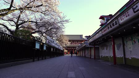 senso ji : TOKYO, JAPAN - March 27, 2019: Spring cherry blossoms at Sensoji Temple Hozomon Gate with unidentified tourist.