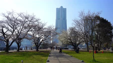 歩道橋 : YOKOHAMA, JAPAN - March 26, 2019: Unidentified people visit cherry blossom at Kishamichi Promenade in Minato Mirai, Yokohama, Japan 動画素材