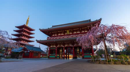 senso ji : TOKYO, JAPAN - March 27, 2019: night to day time lapse of Sensoji Temple with spring cherry blossom in the morning, Tokyo, Japan Stock Footage