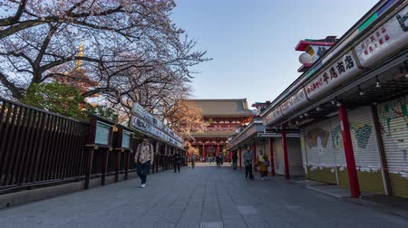 пагода : TOKYO, JAPAN - March 27, 2019: time lapse of spring cherry blossoms at Sensoji Temple Hozomon Gate with unidentified tourist, Tokyo, Japan Стоковые видеозаписи