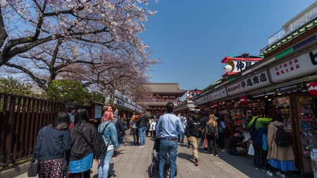пагода : TOKYO, JAPAN - March 27, 2019: time lapse of unidentified people visit Sensoji temple with cherry blossom in Asakusa, Tokyo, Japan Стоковые видеозаписи