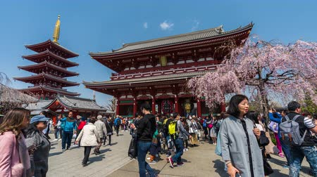 turistická atrakce : TOKYO, JAPAN - March 27, 2019: time lapse of unidentified people visit Sensoji temple with cherry blossom in Asakusa, Tokyo, Japan Dostupné videozáznamy