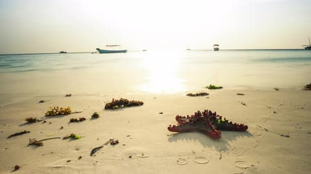 starfish moving on african seashore with boats in ocean on the background at sunset, timelapse Stock Footage