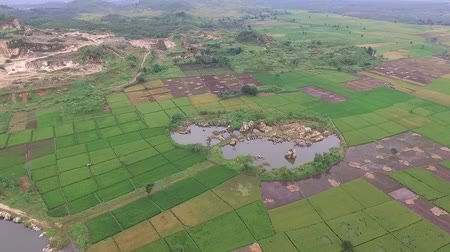 semanal : beautiful Aerialdrone view of rice paddy fields in the slawi city, with green nature scenery side by side with the Ex rock mining area, in tegal, central jawa, indonesia. beautyful scenery from the sky