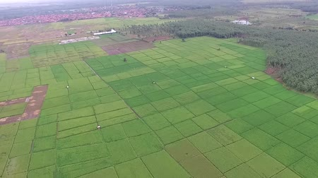 escala : beautiful Aerialdrone view of rice paddy fields in the slawi city, with green nature scenery side by side with the Ex rock mining area, in tegal, central jawa, indonesia. beautyful scenery from the sky