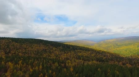 horizonte sobre a água : A birds-eye aerial flight over the road autumn forest. Russia Buryatia