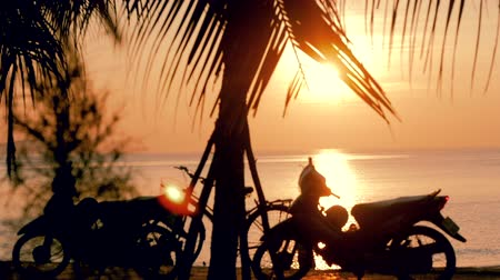 bora bora : Beautiful Sunset in the Tropics on the Backdrop of the Ocean and Coconut Leaves. View of the Sunset Through the Leaves of the Coconut Palm on a Tropical Sea. Concept Vacation, Holiday. Stock Footage