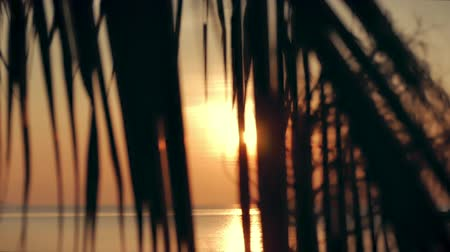 dominican : Beautiful Sunset in the Tropics on the Backdrop of the Ocean and Coconut Leaves. View of the Sunset Through the Leaves of the Coconut Palm on a Tropical Sea. Concept Vacation, Holiday. Stock Footage
