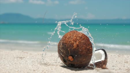 On a Tropical Beach Close-Up Falls From a Palm Tree Coconut, Under the Hot Summer Sun, it is Divided Into Two Parts Along the Tropical Exotic Coast.