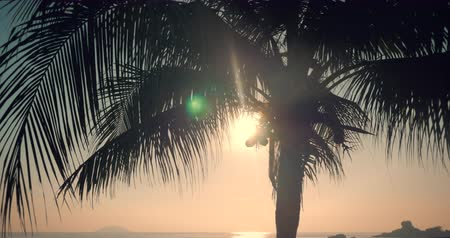Beautiful Sunset in the Tropics on the Backdrop of the Ocean and Coconut Leaves. View of the Sunset Through the Leaves of the Coconut Palm on a Tropical Sea. A Look at the Palm Tree at Dawn.