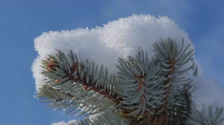 Snow-covered Christmas tree, Bright sunlight falling with snow, snowflakes falling from the trees. Filmati Stock