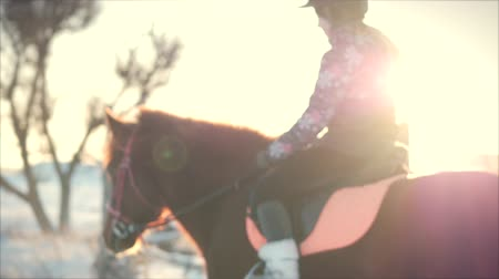 aro : Beautiful Horses Posing for the Camera, a Horse With a Rider in the Winter at Sunset, Close-Up. Slow Motion. Shooting on Steadicam, the Concept of Wild Nature.