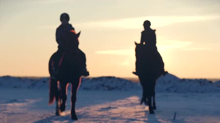 Horses With Riders and the Winter at Sunset, Close-Up. Beautiful Horse With a Rider in the Winter, Slow Motion. Shooting on Stedikam, Concept Love the wildlife. Filmati Stock