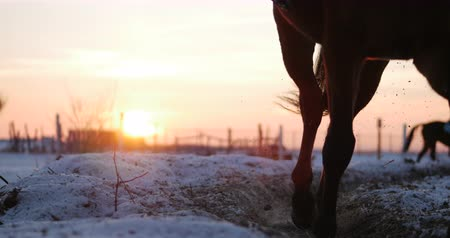 aro : Horses With Riders Ride in the Aviary, Winter on The Street Against the Beautiful Sunset, Close-up. Beautiful Horse With Rider in Winter, Slow Movement. Shot on Steadicam.