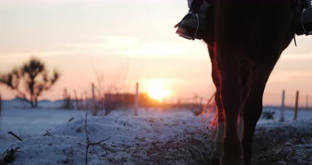 hoof : Horses With Riders Ride in the Aviary, Winter on The Street Against the Beautiful Sunset, Close-up. Beautiful Horse With Rider in Winter, Slow Movement. Shot on Steadicam.