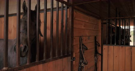 Beautiful thoroughbred horse is in the stable behind a metal bars looking into the camera. Animal care. The concept of horses and people.