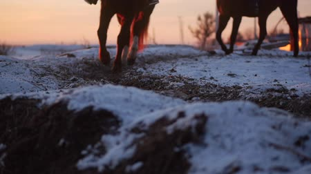 Орегон : Horses With Riders Ride in the Aviary, Winter on The Street Against the Beautiful Sunset, Close-up. Beautiful Horse With Rider in Winter, Slow Movement. Shot on Steadicam.