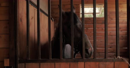 копытное : Beautiful thoroughbred horse is in the stable behind a metal bars looking into the camera. Animal care. The concept of horses and people.