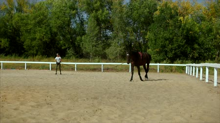 騎乗位 : Horse riding in the summer forest. Caring for the animals. training after a long break. Concept Horse and People.