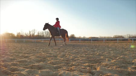 equino : Rider rides his horse at sunset . Woman rider learns to ride a horse in the evening on a blue sky background . Animal care. Concept of horses and people.