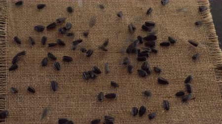 girassóis : Falling grains of sunflower seeds.
