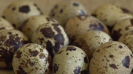 bird eggs : Uncooked quail eggs in pack. Rotating and closeup. Nobody Stock Footage