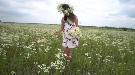 camomile : Pregnant woman picking camomile flowers on summer meadow.