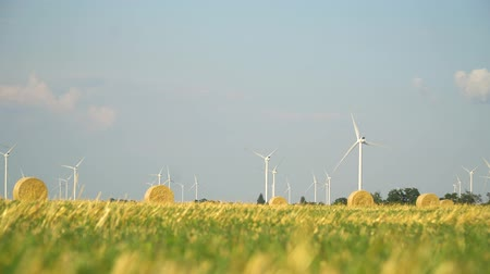 Green wheat field in motion with wind turbines in the background.