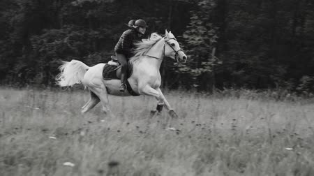 Early morning with the horse in a forest in Black and White