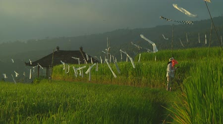 indonesia : Rice terraces in Bali, Indonesia Stock Footage