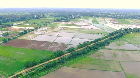 maravilhoso : HD aerial view from drone. Rice plantation field. Agricultural area in countryside. Stock Footage