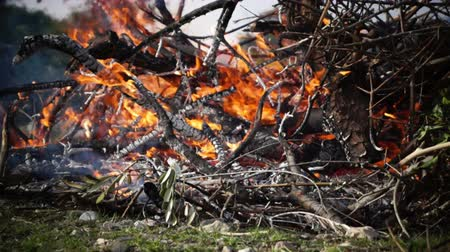 sararmış : burning branches in the field. Close up shot.
