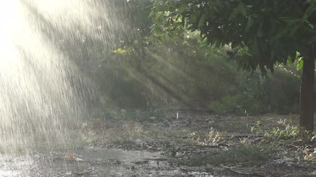 gota de chuva : Drops and droplets of rain are falling in a field with orange trees. Stock Footage