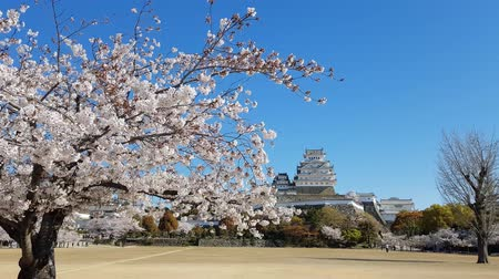 kyoto : Cherry blossom and the Himeji castle in Japan