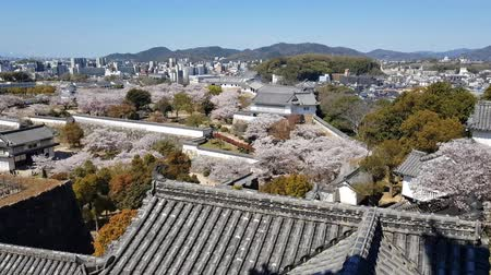 oriental cherry tree : View of Himeji castle from the top